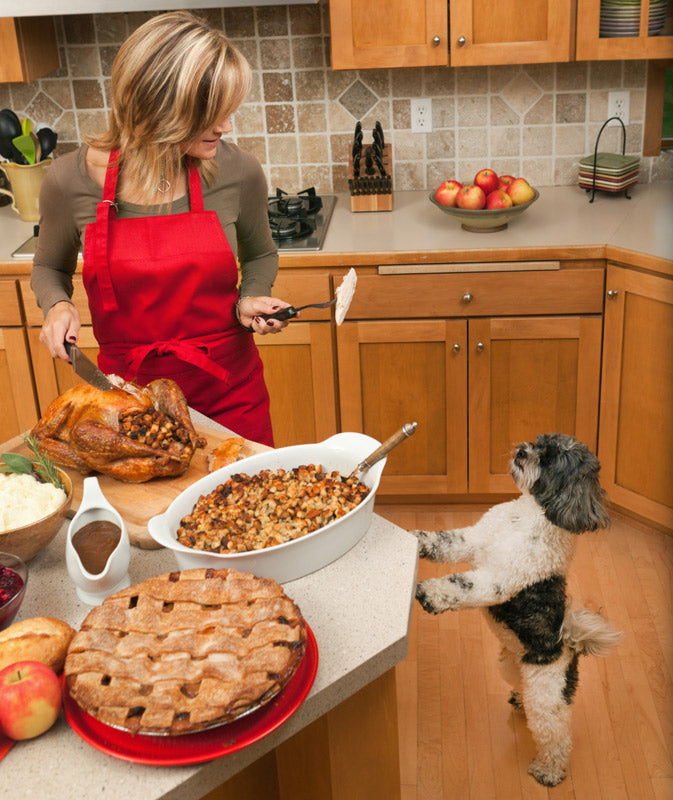 Woman holding piece of Thanksgiving turkey for dog in kitchen