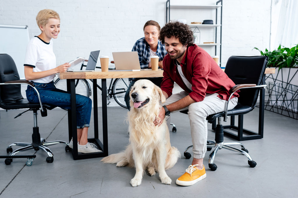 3 Benefits to Bringing Your Dog to Work