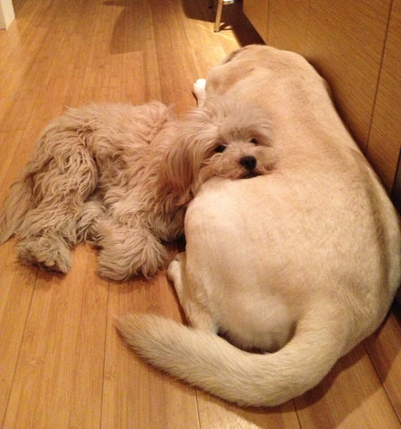 two dogs laying on each other