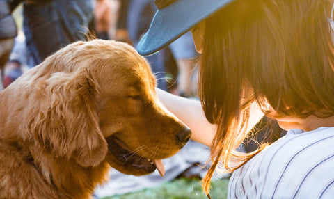 woman comforting golden retriever dog