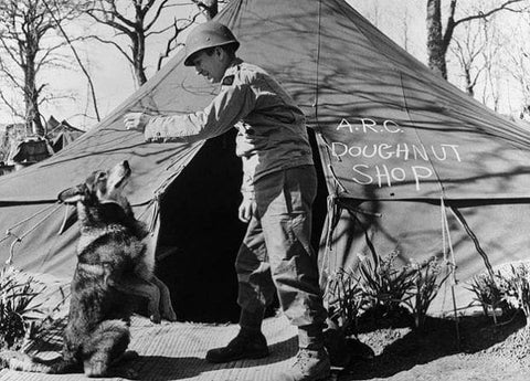 chips - most decorated dog in World War Two
