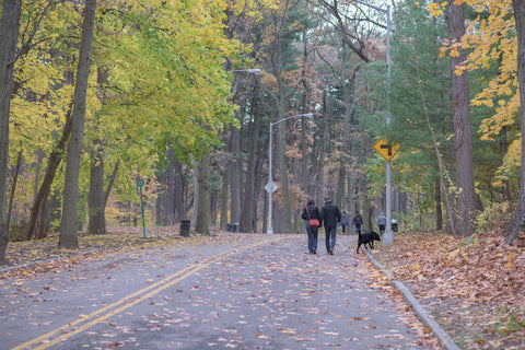Couple walking black dog in the fall