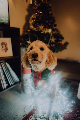 Dog Wrapped in Holidays Lights