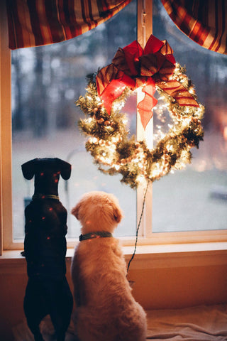 Two dogs gazing out the window with lighted wreath