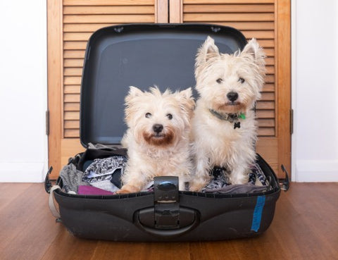 two dogs in a suitcase