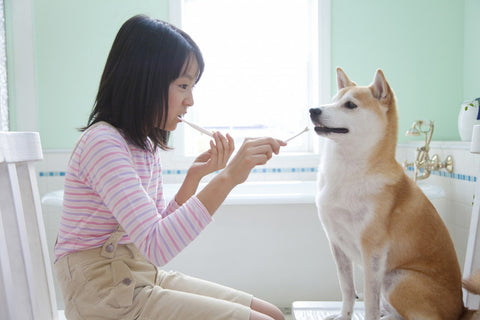 Girl brushing her teeth with her Shiba Inu dog