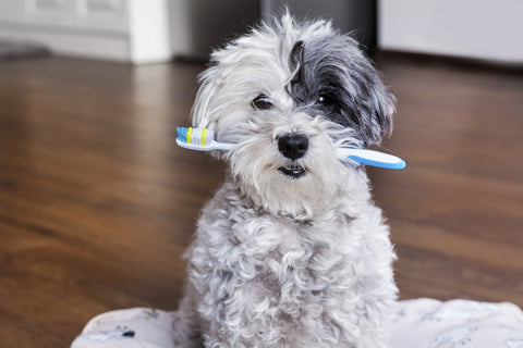 Cute dog carrying a toothbrush