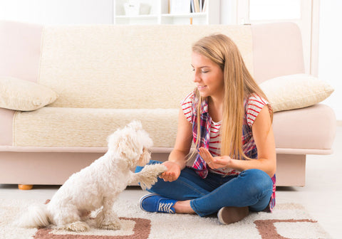 Girl training cute Maltese dog to give a paw
