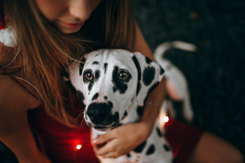 Dalmation with girl