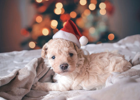 Puppy wearing a santa hat snuggling on a blanket