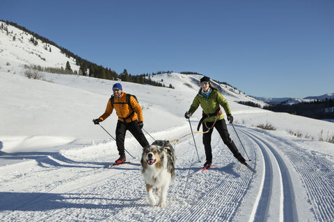 Dog ski joring with 2 people