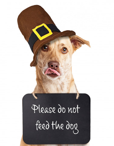 Dog wearing pilgrim hat and wearing do not feed the dog sign