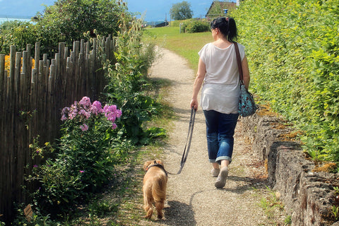 Woman calmly walking her dog with loose leash