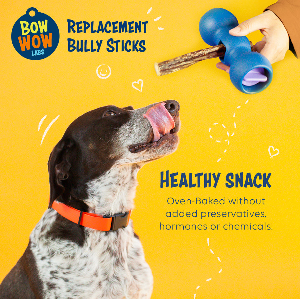 Bully Buddy Starter Kit - A Great Deal!