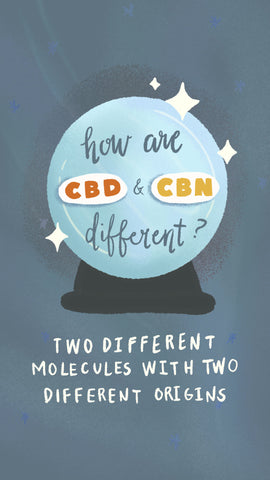 How are CBD and CBN different? Two different molecules with two different origins.