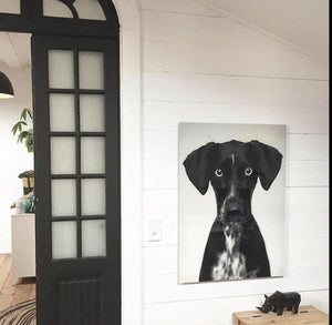 close up picture of black dog by Hk living USA in hallway