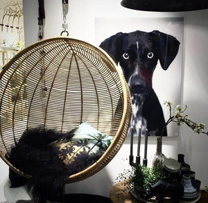 close up picture of black dog by Hk living USA with large hanging bowl chair