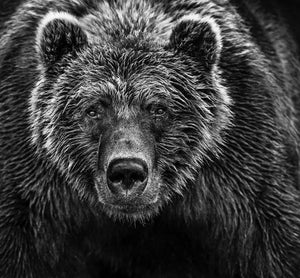 face off by David yarrow black and white photo of brown bear