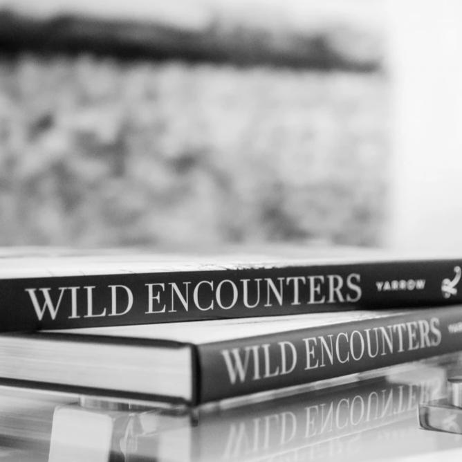 wild encounters coffee table book by david yarrow