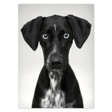 Load image into Gallery viewer, photo on plexibond of black dog close up