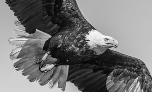 American Eagle by David Yarrow - black and white photo
