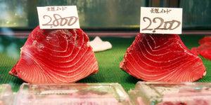 Pacific Bluefin Tuna: On the brink or the rebound?