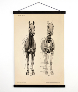 HORSE ANATOMY WALL HANGING