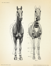 Load image into Gallery viewer, HORSE ANATOMY WALL HANGING