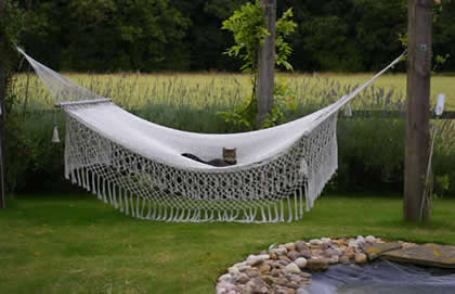 Mexican Hammock with Cat