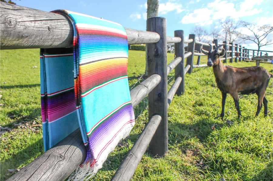 Mexican Striped Blanket with Curious Goat