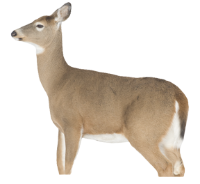 Montana Decoy Whitetail Dreamy Doe Decoy