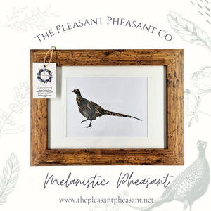 Limited Edition Melanistic Pheasant