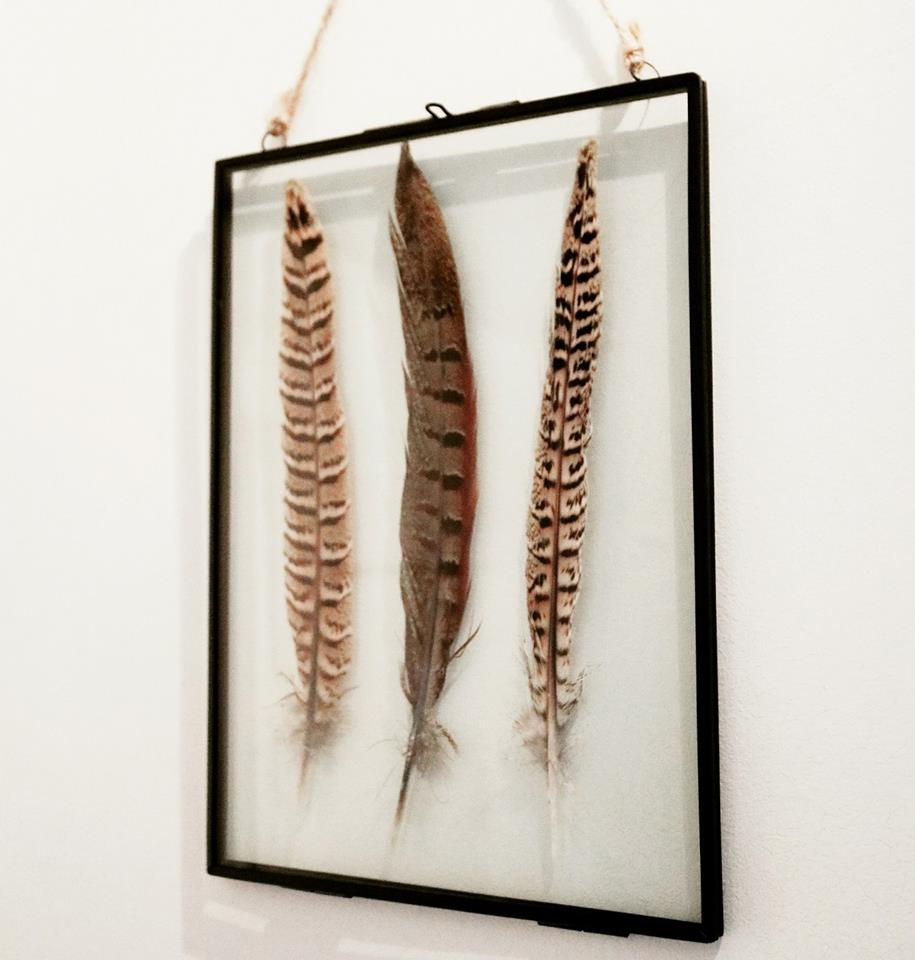 Pheasant Feather Floating Frame