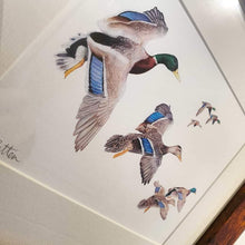 Load image into Gallery viewer, Mallard framed Print