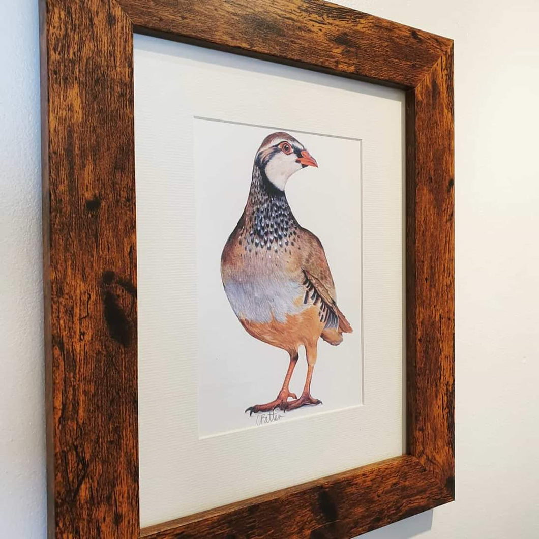 Red Legged Partridge framed print