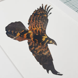 Falcon backed with Grouse Feathers