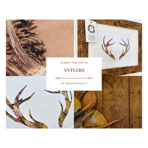 Antlers - Flora & Fauna