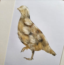 Load image into Gallery viewer, Partridge - Flora & Fauna (1 available)