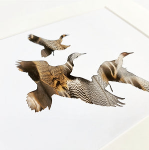 Trio of flying Ducks
