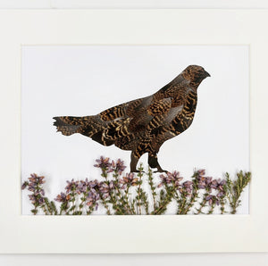 Feather & Foliage - Grouse in Heather