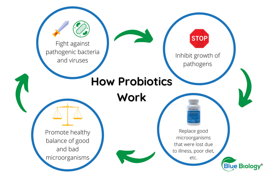Diagram showing how probiotics work