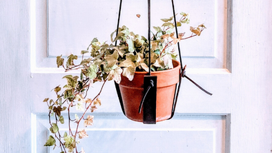 An Easy DIY Leather Plant Hanger