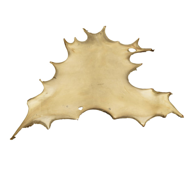 "Leather Deerskin Rawhide Drum Head 23"" x 33"" Large 1-2 oz Deer,"