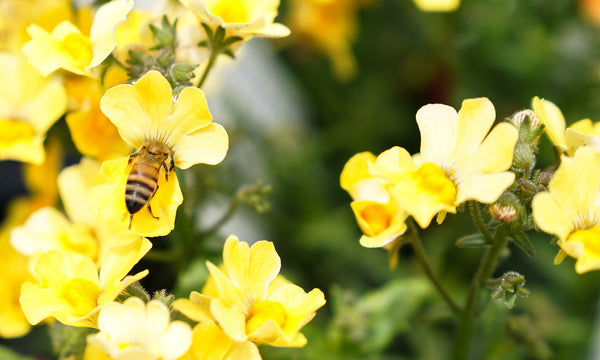 How Climate Change Is Hurting the Bees