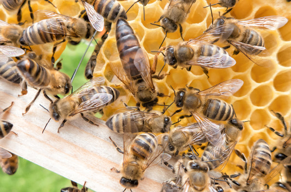 This Is *Exactly* Why We're So Obsessed with Queen Bees