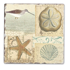 Coaster Shell Collage (4 pack)