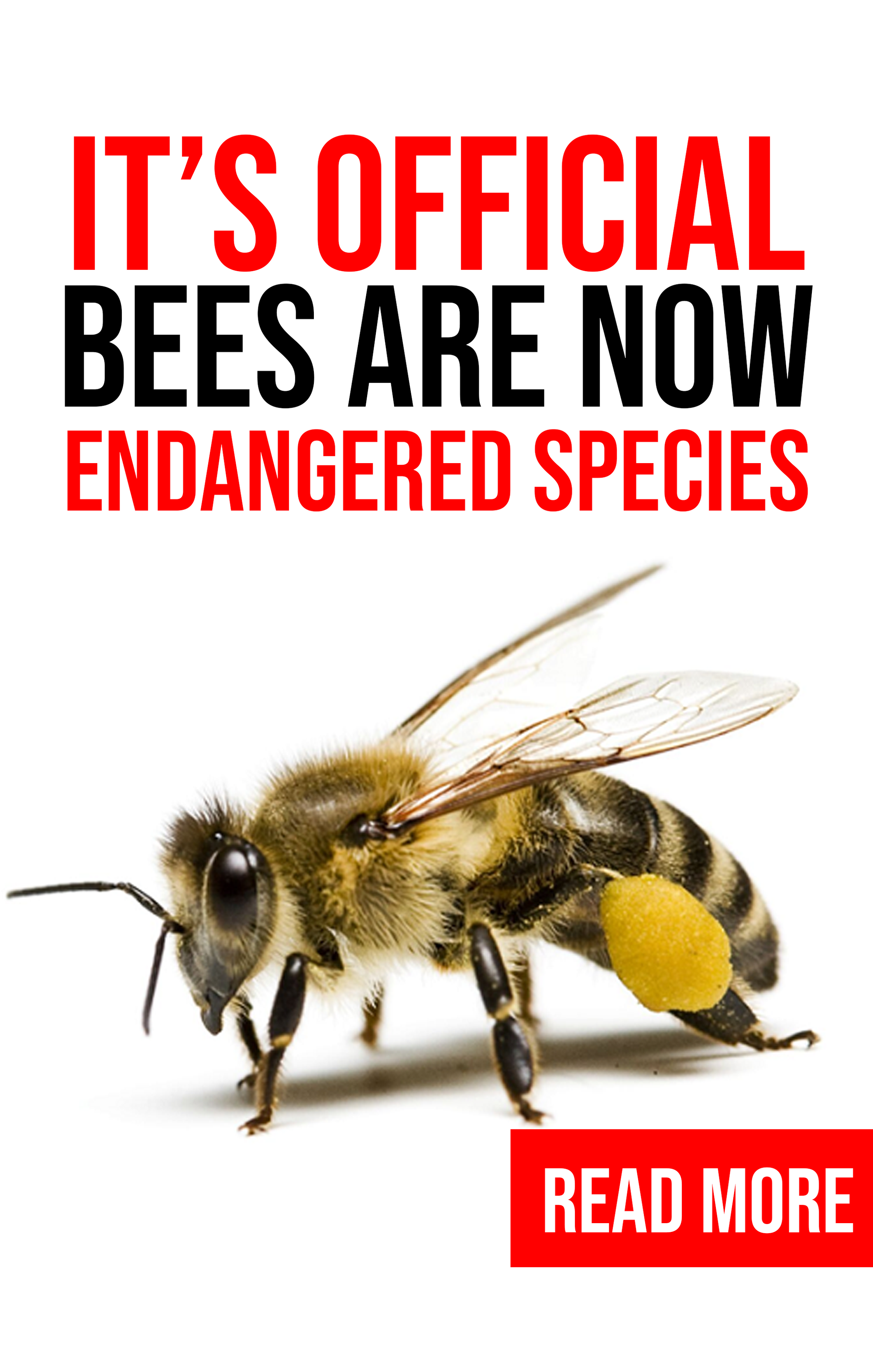 IT'S OFFICIAL, BEES ARE NOW ENDANGERED SPECIES