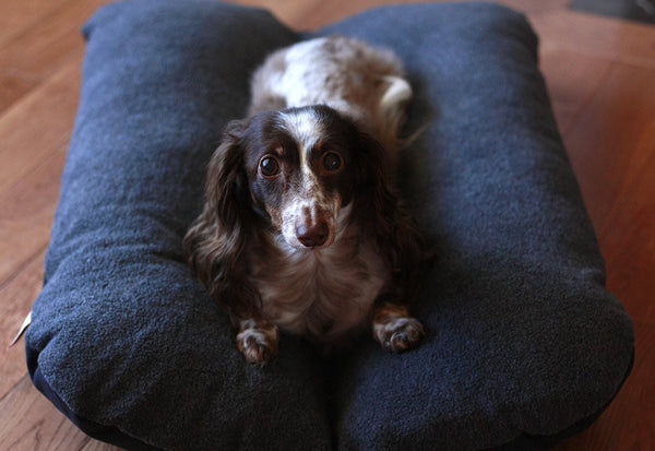Black and Dark Gray Bunbed Dog Bed with Dachshund on Top