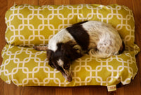 Modern Green Squares, Bunbed, Dachshund Hot Dog Bun Snuggle Burrow Dog Bed, Mid Century Design