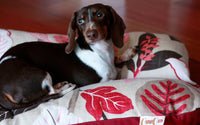 Red Leaves Vines Plants Bunbed, Dachshund Hot Dog Bun Bed